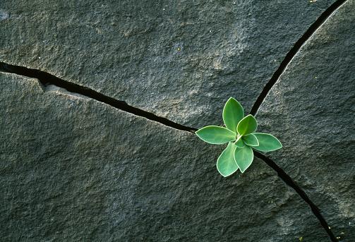 Endurance「Plant Growing in Cracked Boulder」:スマホ壁紙(3)