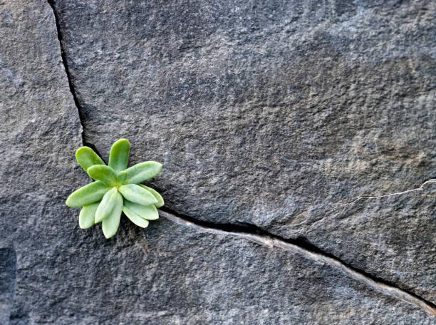 Plant Growing in Cracked Boulder:スマホ壁紙(壁紙.com)