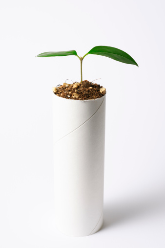 Sapling「Plant growing from a core of toilet paper」:スマホ壁紙(3)