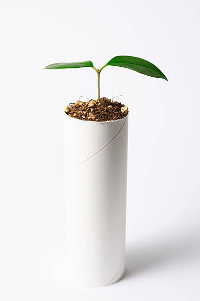 Plant growing from a core of toilet paper:スマホ壁紙(壁紙.com)