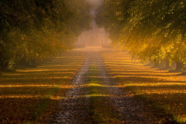 Sunlight「Autumnal Colours In Cheshire」:写真・画像(8)[壁紙.com]
