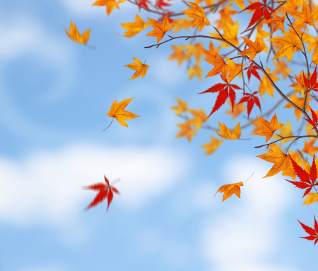 Maple Leaf「Here Comes The Autumn」:スマホ壁紙(5)