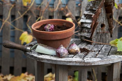 Planting「Planting hyacinth bulbs」:スマホ壁紙(12)
