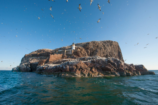 East Lothian「Lighthouse with gannet colony, Bass Rock, UK」:スマホ壁紙(1)