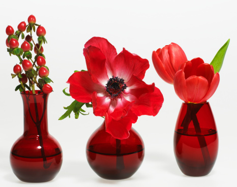 カーネーション「Three plants in red vases, front view」:スマホ壁紙(0)