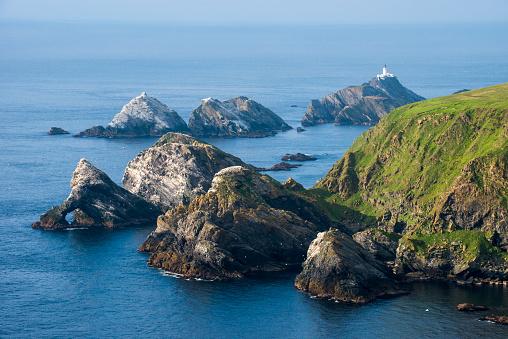 Wilderness「Northern gannet breeding colonies on rocky islands」:スマホ壁紙(17)