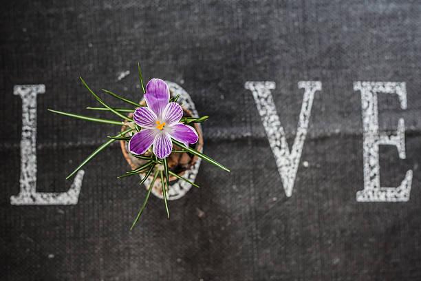 Word love with flower:スマホ壁紙(壁紙.com)