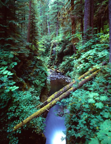 Olympic Rainforest「Gorge with fallen logs」:スマホ壁紙(5)