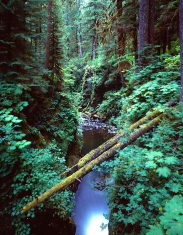 オリンピック雨林「Gorge with fallen logs」:スマホ壁紙(4)