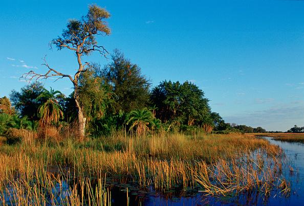 Simplicity「Reed Beds, Okavango Delta, Botswana, Africa」:写真・画像(10)[壁紙.com]