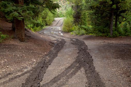 Dirt Road「Wet, muddy road and tracks through forest」:スマホ壁紙(15)