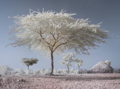 Rajasthan「Infrared image, Thar Oasis, Rajasthan, India」:スマホ壁紙(16)