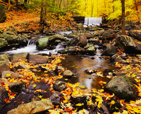 サトウカエデ「秋の滝にニューヨーク(P )」:スマホ壁紙(7)