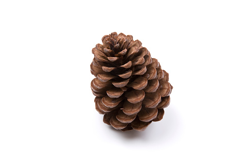Pine Cone「Pine Cone」:スマホ壁紙(8)
