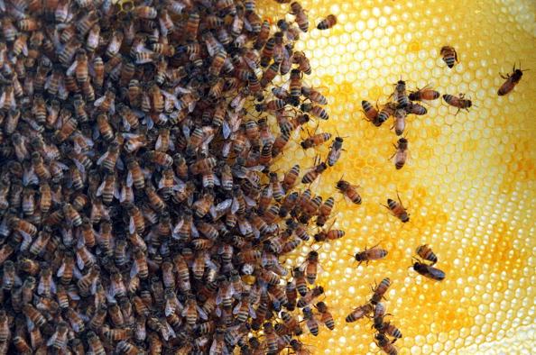 Sandia Mountains「Bee land mine detection experiment」:写真・画像(9)[壁紙.com]