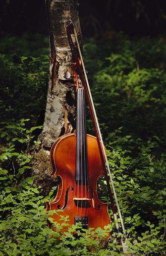 Violin「Violin By Birch Tree」:スマホ壁紙(8)