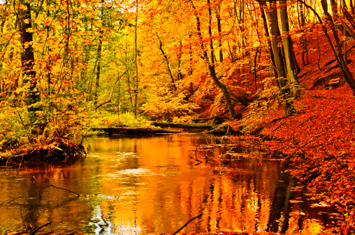 紅葉「川にある秋の森」:スマホ壁紙(14)