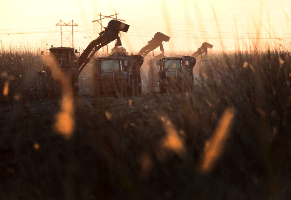 Sugar Cane「New Farm Bill Retains Price Supports For US Sugar Industry」:写真・画像(18)[壁紙.com]