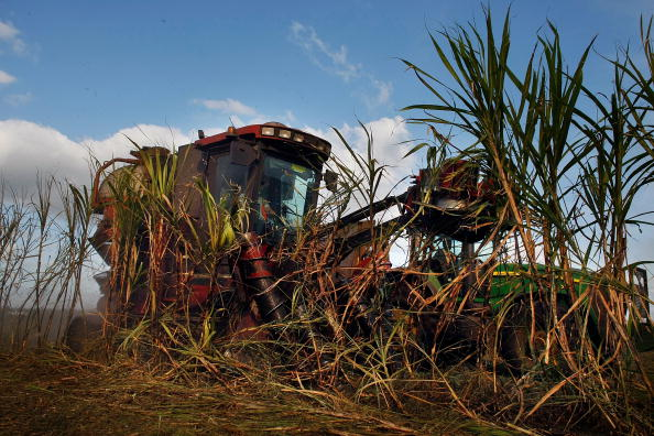 Florida - US State「Florida Acquires U.S. Sugar Land As Part Of Everglades Restoration」:写真・画像(16)[壁紙.com]