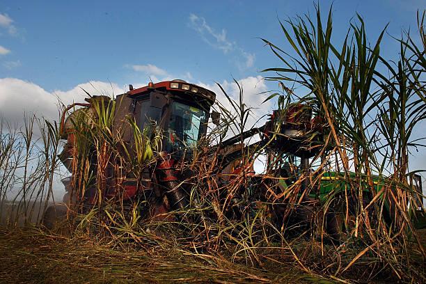 Florida Acquires U.S. Sugar Land As Part Of Everglades Restoration:ニュース(壁紙.com)