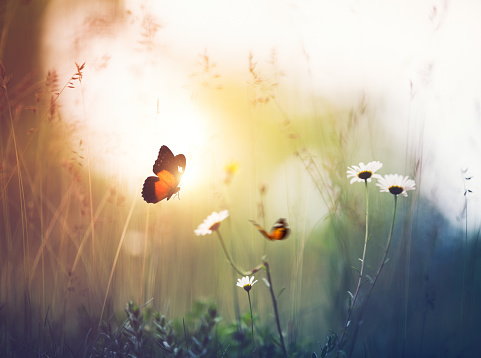 Tranquil Scene「Meadow with Butterflies」:スマホ壁紙(13)