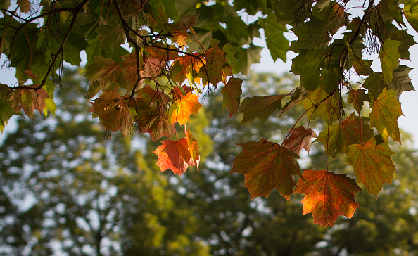 Tree「October Begins With A Glorious Autumn Morning」:写真・画像(16)[壁紙.com]