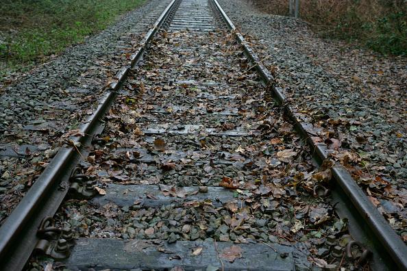 葉・植物「Leaves on the line」:写真・画像(12)[壁紙.com]