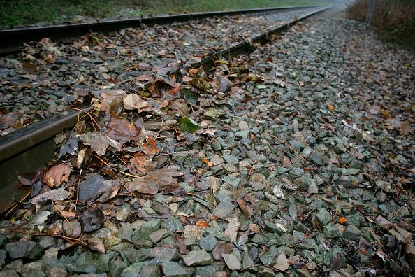 葉・植物「Leaves on the line」:写真・画像(10)[壁紙.com]