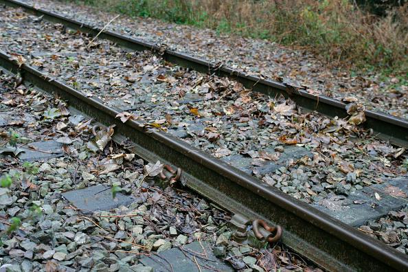 葉・植物「Leaves on the line」:写真・画像(17)[壁紙.com]