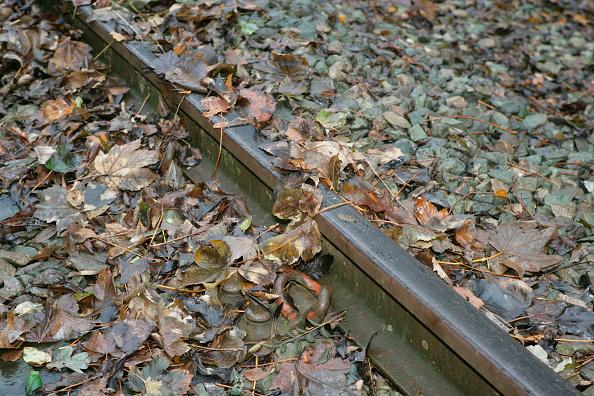 葉・植物「Leaves on the line」:写真・画像(14)[壁紙.com]