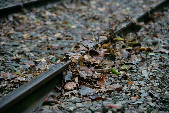 葉・植物「Leaves on the line」:写真・画像(11)[壁紙.com]