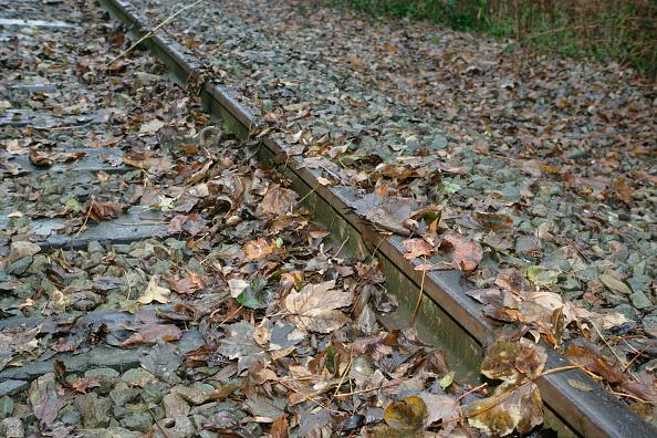 葉・植物「Leaves on the line」:写真・画像(18)[壁紙.com]