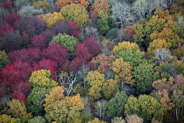 葉・植物「Autumn Colours Arrive In The UK」:写真・画像(16)[壁紙.com]