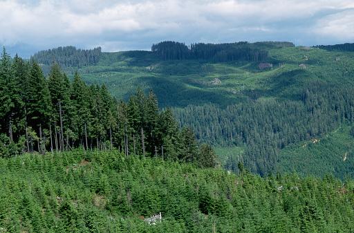 Deforestation「Patchwork of Old Clearcuts」:スマホ壁紙(3)