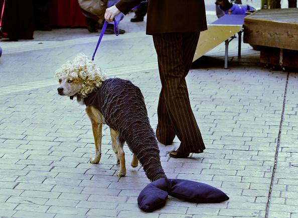 Costume「San Francisco Dogs Dress Up For Halloween」:写真・画像(15)[壁紙.com]