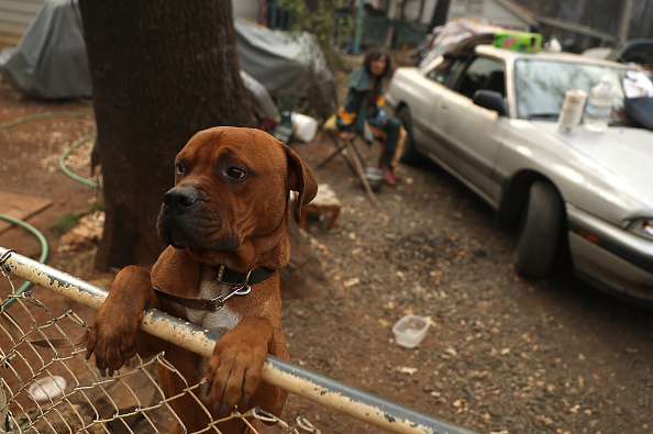 animal「California's Destructive Camp Fire Kills 23, Burns Over 100,000 Acres」:写真・画像(8)[壁紙.com]