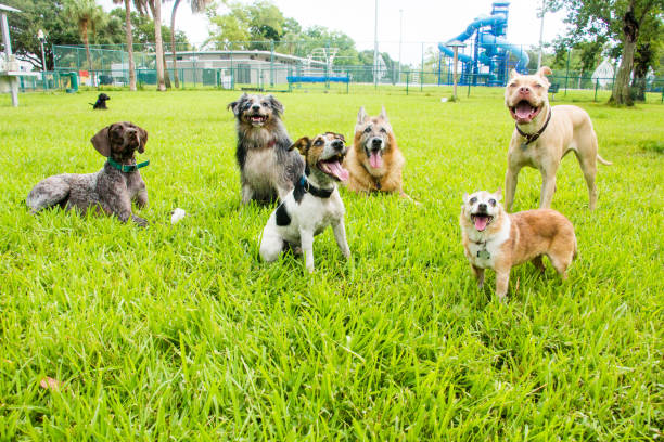 Six dogs in a dog park, United States:スマホ壁紙(壁紙.com)