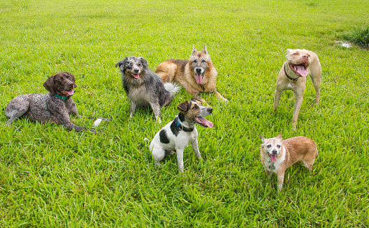 Green Background「Six dogs in a dog park, United States」:スマホ壁紙(14)