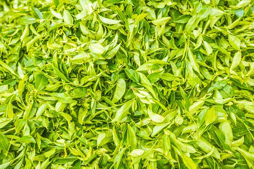Sri Lanka「Tea Leaves」:スマホ壁紙(11)