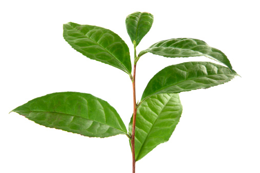 茶葉「茶葉」:スマホ壁紙(4)