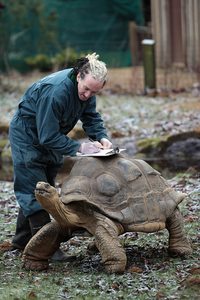 animal「London Zoo's New Year Animal Count Gets Underway」:写真・画像(18)[壁紙.com]