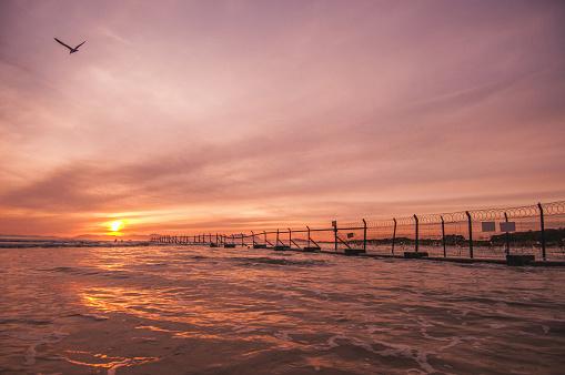 鳥「素晴らしい夕日」:スマホ壁紙(2)