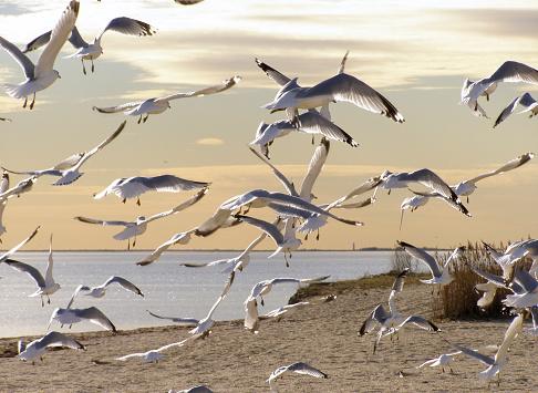 Flapping Wings「Sunset Seagulls」:スマホ壁紙(18)