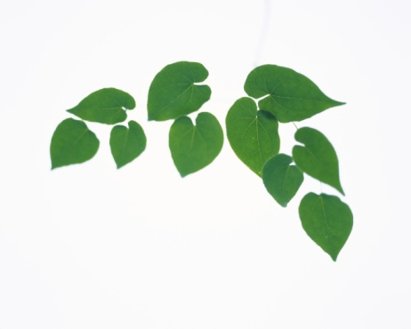 Ivy「Pothos Leaves, Close Up, Copy Space」:スマホ壁紙(8)