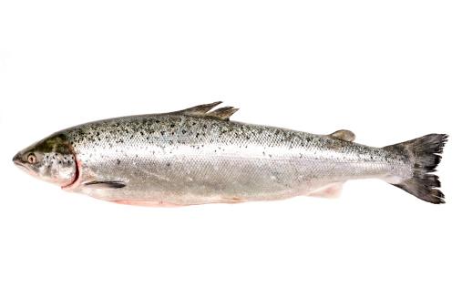 Animal Head「Fresh whole salmon」:スマホ壁紙(13)