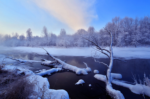 松林「Heilongjiang province Greater Khingan Range River Snow,China」:スマホ壁紙(1)