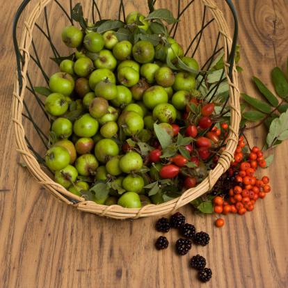 Rowanberry「Hedgerow Fruits」:スマホ壁紙(2)