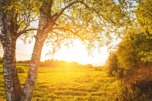 Grove「Rural scene in Sweden」:スマホ壁紙(15)