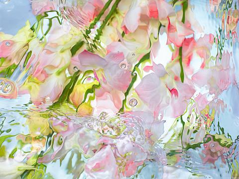 Sensory Perception「Orchid under warter」:スマホ壁紙(10)
