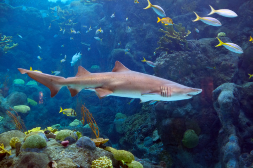 Shark「Shark Tank」:スマホ壁紙(19)